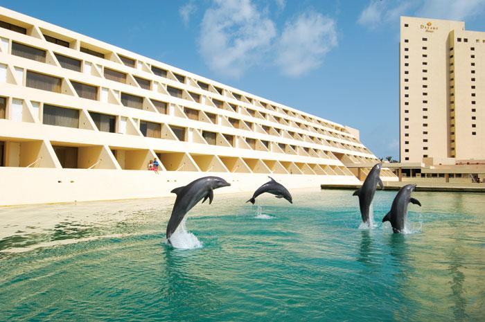 Dreams Dolphins