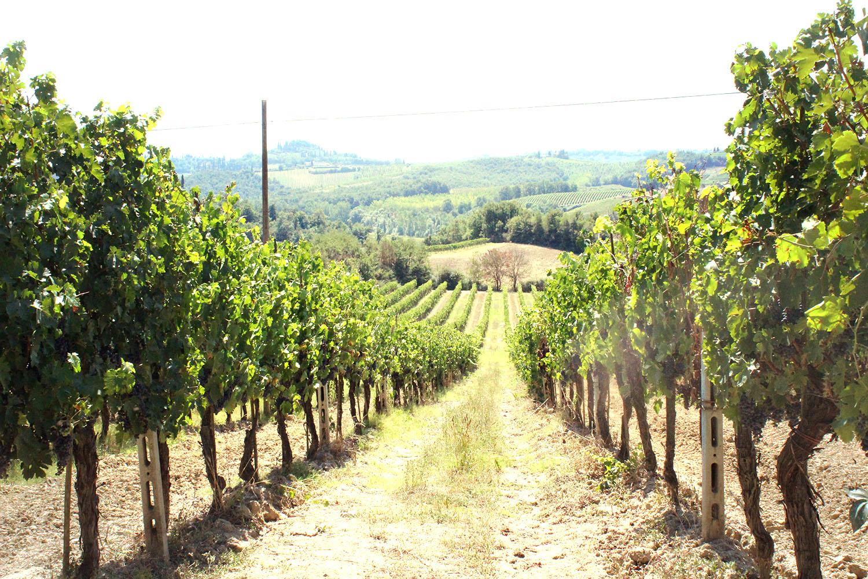 Wine Tasting at Fattoria Poggio Alloro in San Gimignano | Bottles & Banter