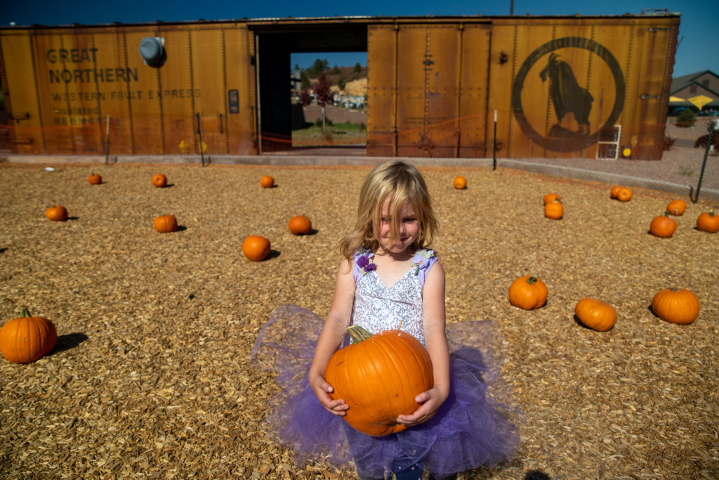 4 year old girl picks a pumpkin from the pumpkin patch at the Jellystone Park Larkspur